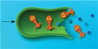 image: Sea Bugs