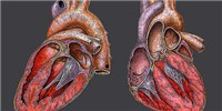 image: Stem-Cell Heart Repair Questioned