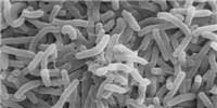 image: Cholera Shaped Human Genes