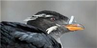 image: Opinion: Marine Canaries in the Coalmine