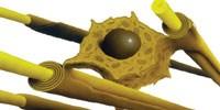 image: Remodeling Myelin