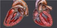 image: Engineered Hearts Beat
