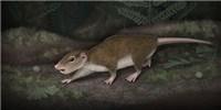 image: Ancient Mammalian Fossil Found