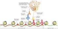 image: Precision Epigenetics
