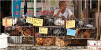 image: Multiple Bird Flu Threats Lurk