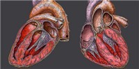 image: Framingham Heart Study Gutted