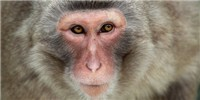 image: Monkeys Accept Virtual Arms as Own