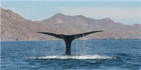 image: Blue Whales Get Tans