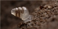 image: Image of the Day: Sightless Snail