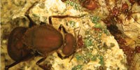 image: Biofuel Mimicry