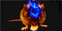 image: Brain Circuit Toggles Eating
