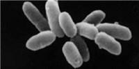 image: Bacteria Trade Genes