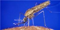 image: Bug Off