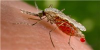 image: Progress for First Malaria Vaccine