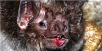 image: More Evidence MERS Came from Bats