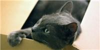 image: Understanding Cats