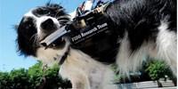 image: Doggie Dialogue