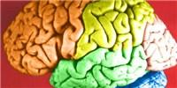 image: DARPA Supports Brain Treatment