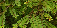 image: Inauthentic Herbals
