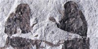 image: Image of the Day: Carbon Dating