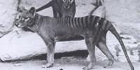 image: Testing De-extinction