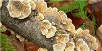 image: Image of Thanksgiving Day: Feathery Fungi