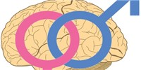 image: Male and Female Brains Wired Differently