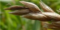 image: GMO Retraction Sparks Retribution