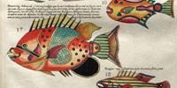 image: Fantastical Fish, circa 1719