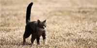 image: Herding Cats