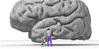 image: New Neuroscience Journal to Launch