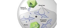 image: Visualizing Viruses
