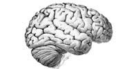image: Schizophrenia's Intricacies