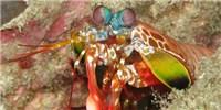 image: Shrimp Sight