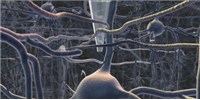 image: Single Neuron-Imaging Bot