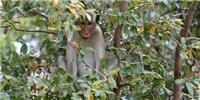 image: Monkey Mind Control
