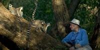 image: Esteemed Primatologist Dies