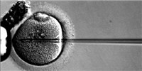 image: U.K. To Legalize Three-Parent IVF?