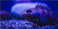 image: Flashy Deep Sea Fish