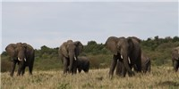 image: Discerning Elephants