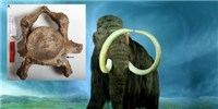 image: Birth Defects Marked End of Mammoths