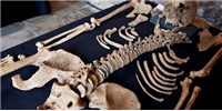 image: Bones Tell Black Death Story