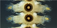 image: Image of the Day: Tenacious Larvae