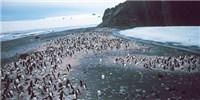image: New Bird Flu Found in Penguins