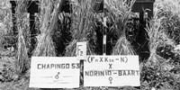 image: Wheat Whisperer, circa 1953