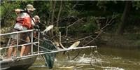 image: Combating Asian Carp