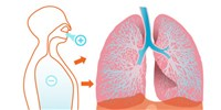image: Breathing Life into Lung Microbiome Research