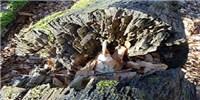 image: Re-examining Rots
