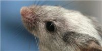 image: Running Mice Regain Vision