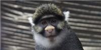 image: Monkey See, Monkey Don't